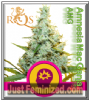 Royal Queen AMG 5 Female Cannabis Seeds